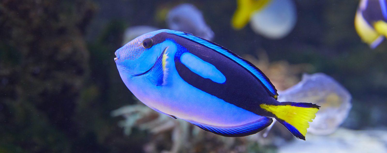 Der blaue Fisch